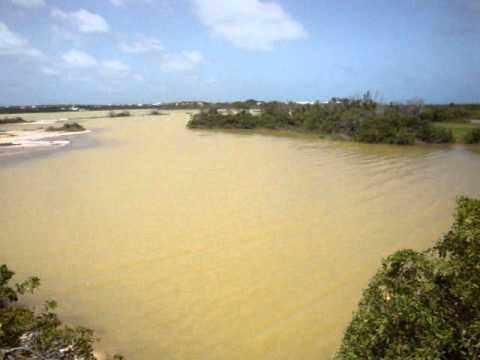 Anguilla's Cove pond video 3
