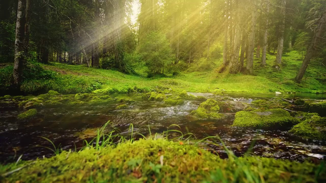 3 hours Relaxing music, , with forest ambient sounds for relaxing, for meditation for peaceful