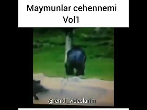 Hayvanlara  işkence  eden maymun  😠😨🐒