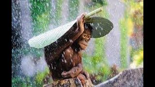 Tik tik bunyi hujan lagu anak indonesia HD