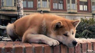 Richard GERE-в фильме- Хатико,самый верный друг- 1080рHD