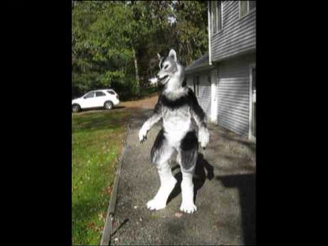 how to make 4 legged wolf costume
