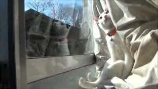 AMAZING Cat Toilet Training Tips