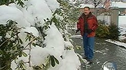 A Foot of Snow in Dallas