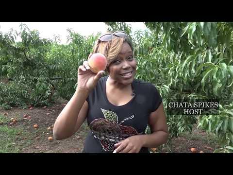Gregg Farms Sweet Georgia Peach Shoot
