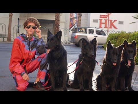 off-leash-pack-walk-on-hollywood-blvd!!!