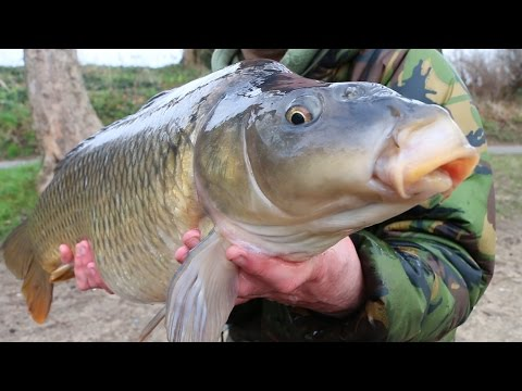 Successful Winter Carp Fishing Tips And Tactics