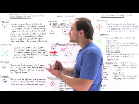 Innate and Adaptive Immune Systems