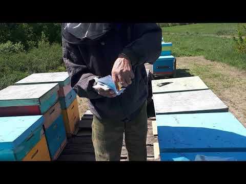 Обработка пчел биопаром