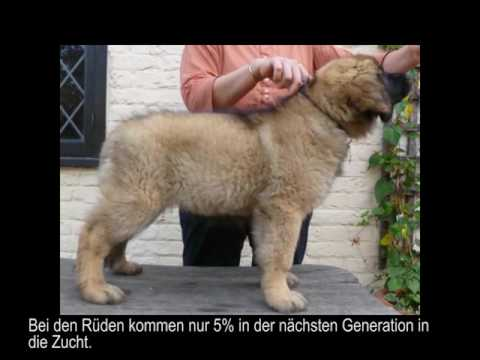 Safeguarding Genetic Diversity in the Leonberger Breed DE 2
