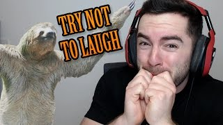 try not to laugh animal fails