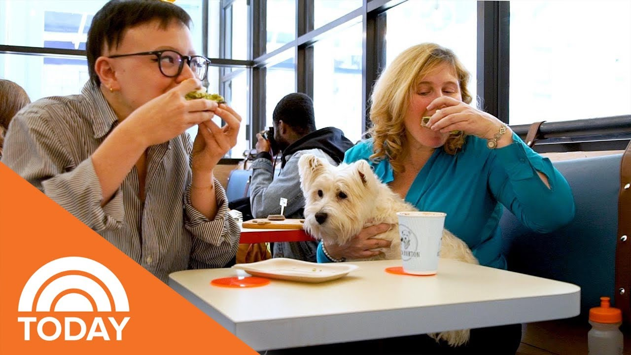 New York's First Dog-Friendly Cafe Is Finally Here! | TODAY