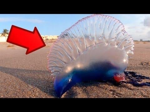 حيوان غريب جدا لو وجدته علي البحر عليك بالهروب