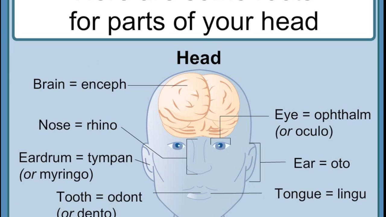 how to interpret medical terms understanding medical words a
