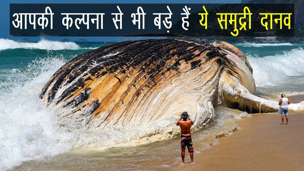 Download Biggest sea creature in the world in Hindi | Ocean Animals