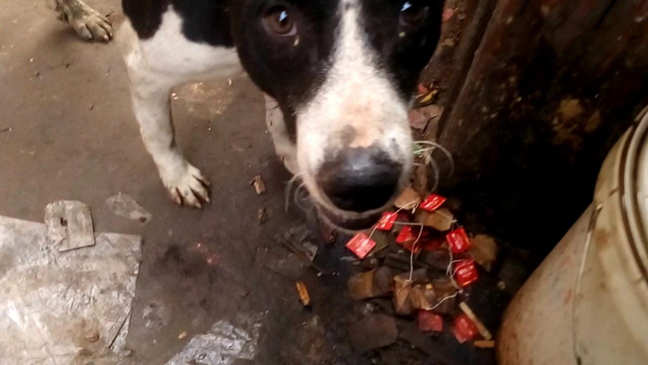 Poor Dog   street dog     Pet and Animals