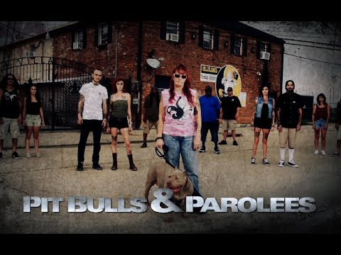 'Pit Bulls & Parolees' new season clip: 'Dogs Are Being Dumped at Villalobos''