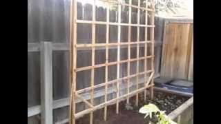Trellis For My Plants
