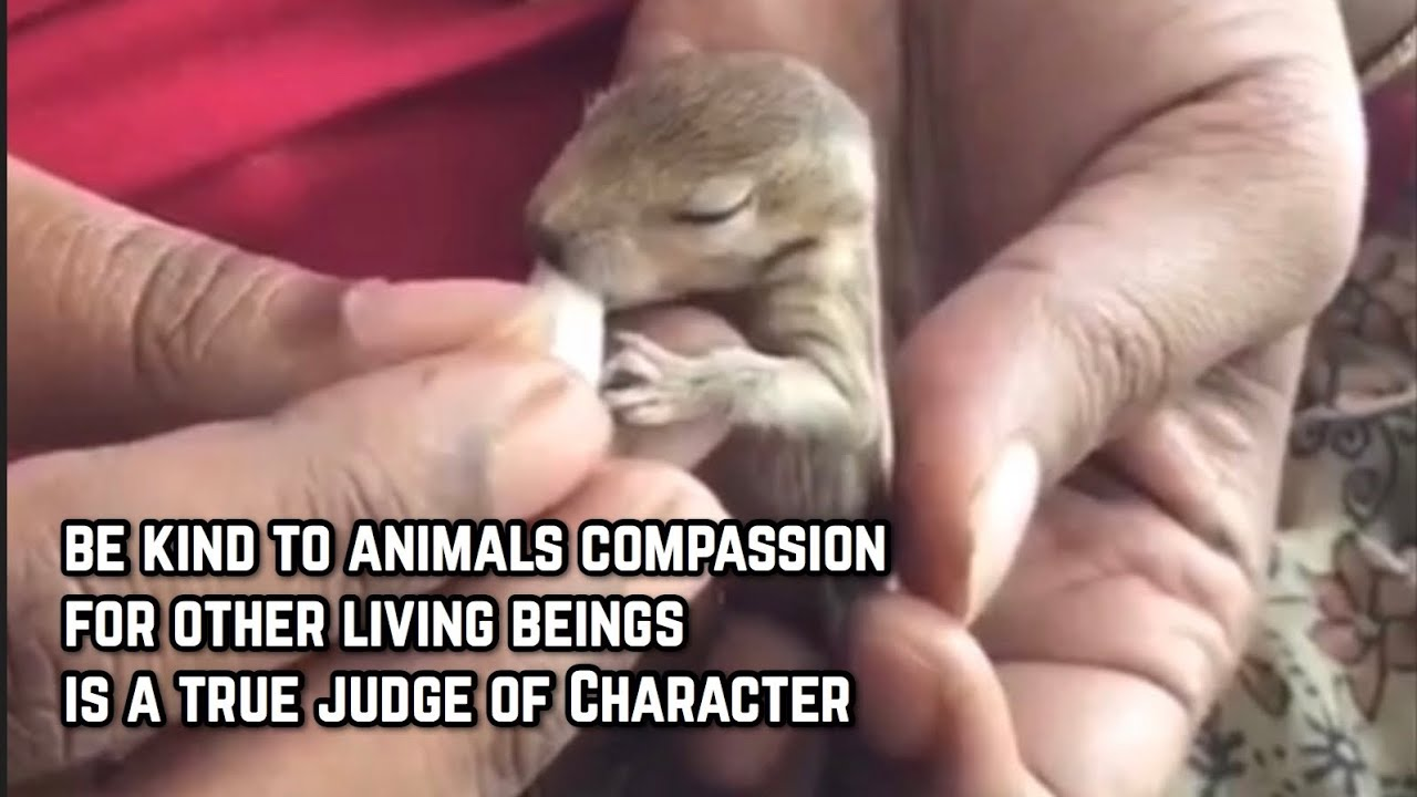 Faith In Humanity Restored 2019 Part 13 ( Be Kind Be Aware )
