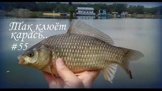 КР #55 - Так клюёт карась..(Ставим качество, смотрим на вершинки удилищ, оцениваем видео! Фото с рыбалки: https://instagram.com/aleks_bars Ваш