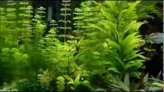 CO²-Anlage im 720-Liter-Aquarium