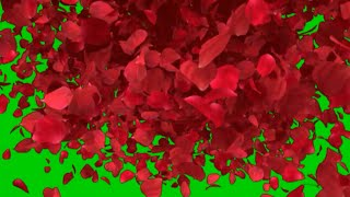 Download Video Green screen rose fx effect HD with sound. Green screen rose petals. MP3 3GP MP4