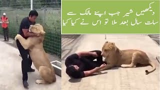 A lion sees his master after 7 years and heart touching emotions were recorded on camera-Awesome