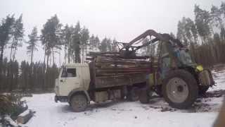 Погрузка кругляка сосны в КАМАЗ трактором