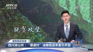 《中国三农报道》 20201117|CCTV农业 - YouTube