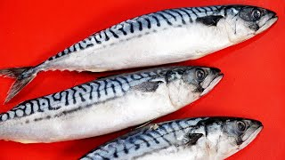 Mackerel can surprise you! Part 2 I WANT YOU to try these 5 RECIPES