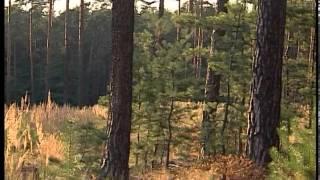 Wycieczka do lasu  - film z audiodeskrypcją