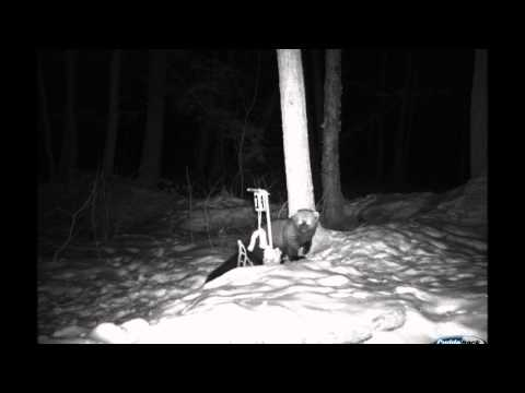 Movie 1 26 13 fox and fisher cat