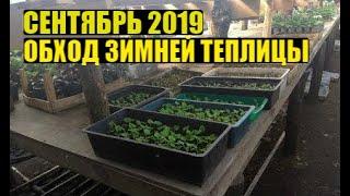 Обзор рассады, черенков к 8 марта и других растений в зимней теплице!