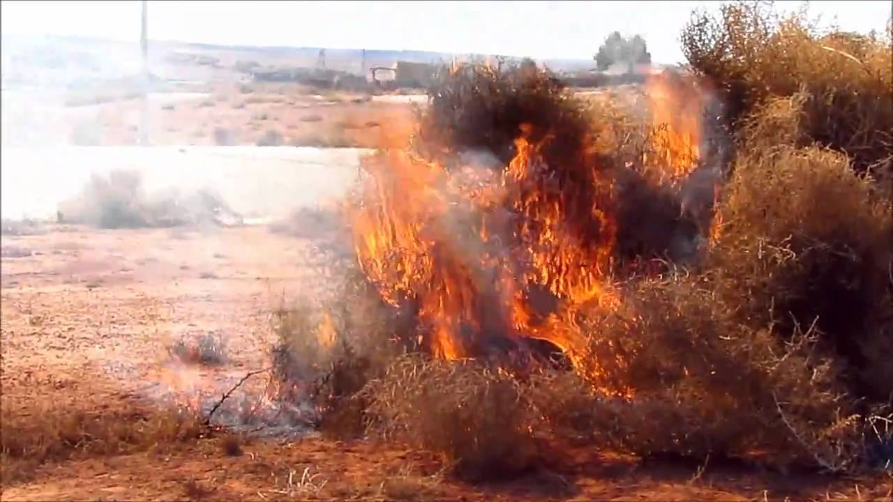 Violent Uncontrolled Tumbleweed Wildfire Youtube