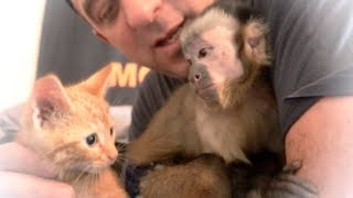 Baby Monkey Meets Cute Adopted Kitten!