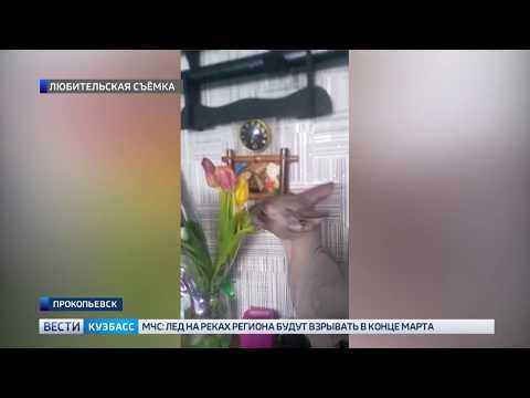 В Прокопьевске кошка съела букет цветов