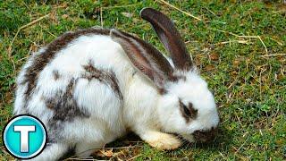 Top 10 Fastest Land Animals