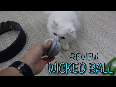 Review: Wicked Ball by Cheerble | Kickstarter Pet Toy