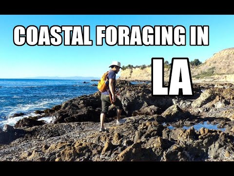 Coastal Foraging In Southern California: Differences Between SoCal Vs. NorCal