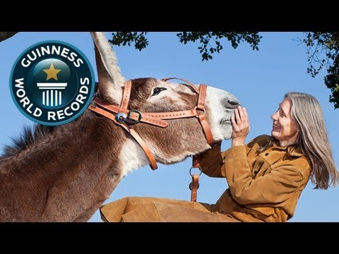 World's Tallest Donkey - Meet The Record Breakers - Guinness World Records