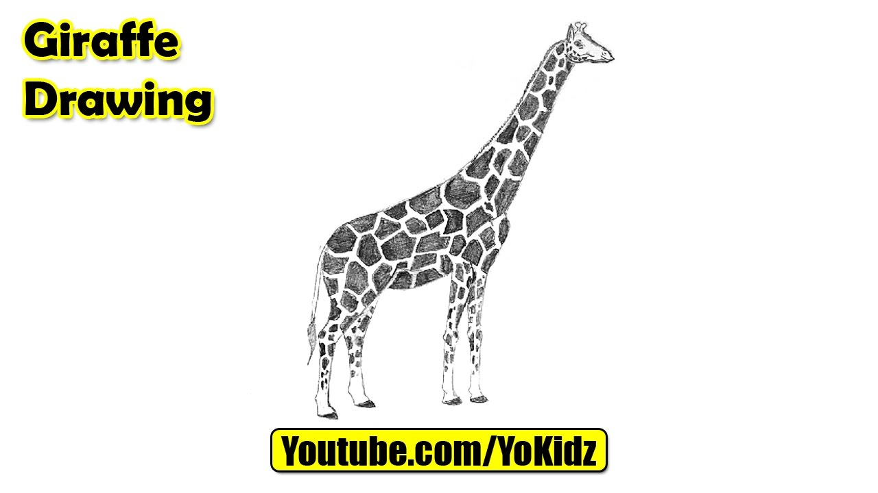 How To Draw A Giraffe Easy Youtube