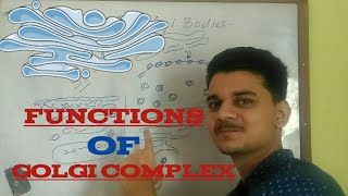 Functions of Golgi apparatus....(Part1)