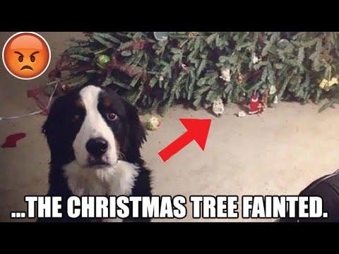 Funniest Christmas memes 2019 - YouTube