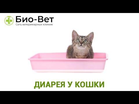 Понос у кота после антибиотиков