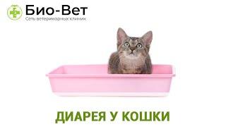 Диарея у кошки. Ветеринарная клиника Био-Вет.