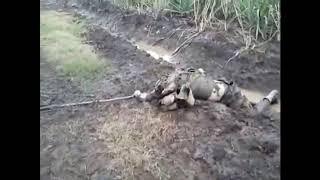 Ypg t.c askerini zeytin tohumu gibi toprağa gömdü