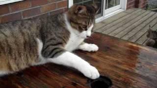 穴からのぞく白い手に、戸惑いつつ真顔でじゃれる猫