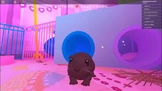 ROBLOX-the guinea pig, Berry playing ROBLOX! (Guinea Pig Silmulator)