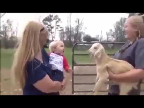 Komik kuzu