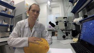 Ученые доказали: картофель-яд! С теми, кто съел картофель случится...